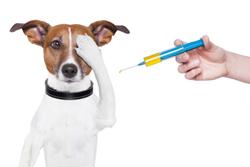 Rabies & Microchip Clinic @ Countryside Animal Health | Smicksburg | Pennsylvania | United States